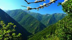Asturias: La reserva de Muniellos. --- Asturies: La réserve de Muniellos. http://es.wikipedia.org/wiki/Reserva_Natural_Integral_de_Muniellos
