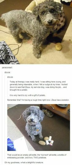 The sweetness of this dog, Zeus is awesome! To him, a potato brings happiness and health. To his owner, nothing brings more happiness than having him (Zeus) <3