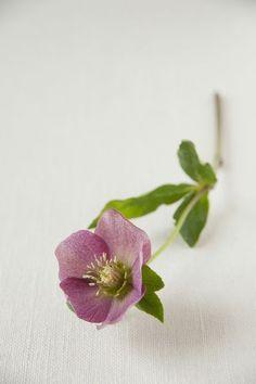 うつむいたような咲き方が可憐な、クリスマスローズ。/暮らしの花飾り(「はんど&はあと」2012年2月号)