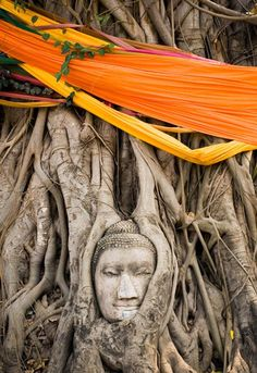 Picture of a Buddha sculpture at the base of a bodhi tree, Thailand