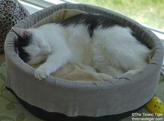 Eddie fast asleep in thinking circle  Cat Nap Sunday! #cats