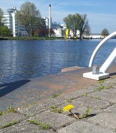 van Nelle  foto: Heleen van Zantvoort Rotterdam