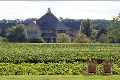 peller estates - grab a wine, sit back and enjoy the view. taken from riverbend inn & vineyards where we stayed for our anniversay in niagara on the lake. Lake Erie, Wine Country, Weekend Getaways, Niagara Falls, Ontario, Toronto, Vineyard, Places To Go, New Homes