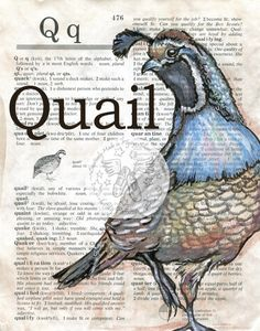 Quail Large Print 8-1//2 x 11 Ready for Framing