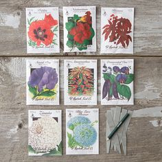 Garden Bouquet Seed Collection via terrain