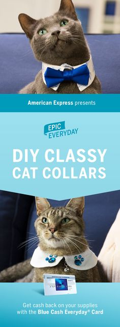 Give your kitty an epic makeover. We partnered with Buzzfeed to show you how to make classy collars for your cat or kitten! Show off the fancy side of your furry pet with this tutorial and create cute, homemade feline fashions – like cool bow ties and bedazzled neck pieces. Shop for the DIY materials and get cash back on purchases with the Blue Cash Everyday Card from American Express. Terms apply. Learn more at americanexpress.com/epiceveryday. Click the pin to watch how to make it.