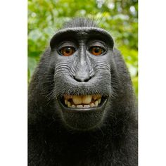 love this smiling macaque monkey