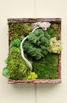Using preserved dry sheet moss this DIY wall decor project is a whole new kind of nature art. Using preserved dry sheet moss this DIY wall decor project is a whole new kind of nature art. Moss Wall Art, Moss Art, Diy Wall Art, Diy Wall Decor, Foam Crafts, Craft Stick Crafts, Art Crafts, Moss Decor, Green Color Schemes