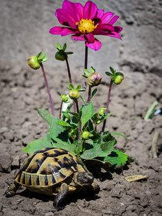 Turtle with a flower by Marius Papadopol on 500px