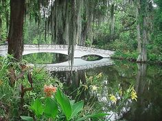 MAGNOLIA PLANTATION AND GARDENS * 3550 Ashley River Rd. * Charleston