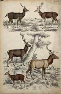 deer for iron on transfers - satch