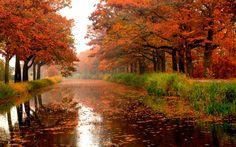 #beautiful#rain#fall#autumn#leaves#colores#