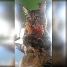 This hungry kitty thought it would be a good idea to steal a big slice of pizza, but got caught!