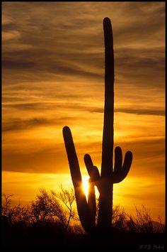 Saguaro National Park, Arizona State Of Arizona, Arizona Usa, Tucson Arizona, Colorado River Rafting, Arizona Sunrise, Trip To Grand Canyon, Desert Art, Nature Scenes, Nature Photos