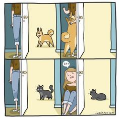 Cats, funny cats and dogs, cat comics, Crazy Cat Lady, Crazy Cats, Cat Comics, Funny Cats And Dogs, Funny Cat Videos, Funny Cartoons, Funny Comics, Cat Life, Cat Memes