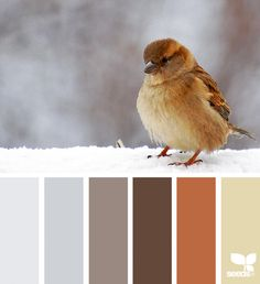 { color chirp } image via: @arctic_stories