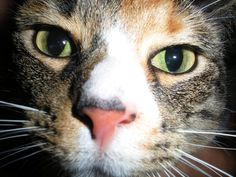 5 Ways I Irritate My Cats -- and I Can't Help Myself | Catster