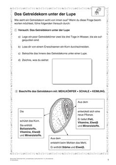 Natur und Leben · Arbeitsblätter · Grundschule · Lehrerbüro The Effective Pictures We Offer You About Life Science cells A quality picture can tell you many things. Elementary School Office, Middle School Science, Elementary Science, Elementary Schools, Teacher Office, Primary School Teacher, Preschool Science Activities, Science Classroom, Life Science Projects