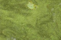 Houghton Lake Residents Concerned Regarding Algae Contaminated W - Northern Michigan's News Leader