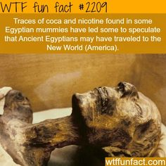 Ancient Egyptians may have traveled to America!