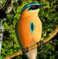 Blue-crowned Motmot is found in eastern Mexico, Central America, northern and central South America, and Trinidad and Tobago