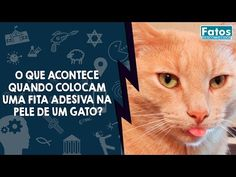 O que acontece quando colocam uma fita adesiva na pele de um gato ~ Empresas de sucesso