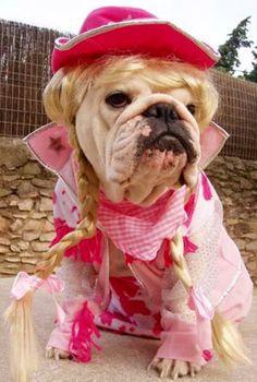 English Bulldog as Daisy Duke? Cute no?