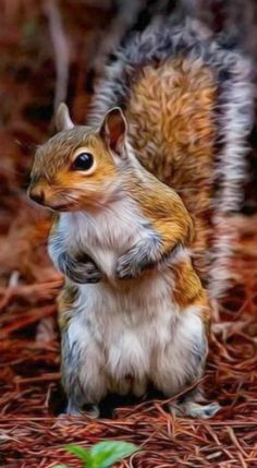 Beautiful photo of a curious Red Squirrel                                                                                                                                                     More