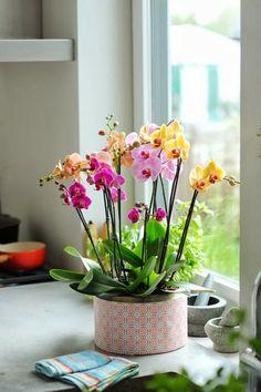Depósito Santa Mariah: Paixão Por Orquídeas!