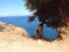 Creta: finalmente un po' di ombra!