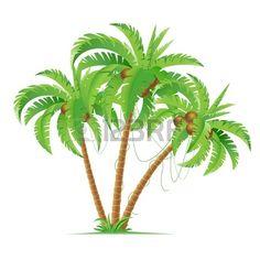 Three cartoon coconut palms.  Illustration on white background