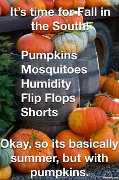 Get your laugh on with these 25 funny pictures of the day 🙂. Fall Humor, Fall Memes, Florida Funny, Florida Humor, Florida Girl, Southern Humor, Texas Humor, First Day Of Autumn, Florida Weather
