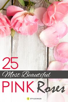 25 Most Beautiful Pink Roses