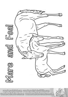 free horse coloring book page wonderweirded wildlifecom from our animal coloring page - Coloring Pages Horses Foals