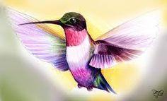 colibri picaflor - Buscar con Google