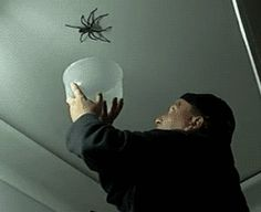 Man catching spider animated gif