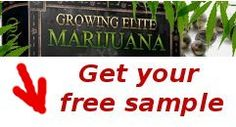 Enter your email address below and check your email for your free sample download link of Growing Elite Marijuana Guide