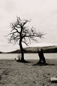 A lonely tree down by the banks of a loch in Scotland.