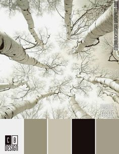White Forest | Color Blocks Design