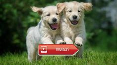 Cute animals  Published on Sunday th June  on Pet Lovers