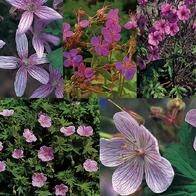 Geranium (Hardy Mix)  Hardy  Sow: Jan - March (indoors)  Sow: Oct - Jan (outdoors)  Flowers: Late Spring - Autumn  Soil Acidity: Any  Soil Dampness: Any  Soil fertility: Medium  Soil drainage: High  Wind protection: Medium