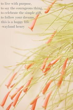 to live a happy life