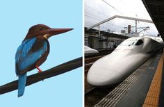 The bullet train and more Examples of Biomimicry Based on Animal and Human Biology.