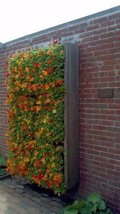 Vertical Flower Garden, nasturtiums See more garden ideas at: http://www.pinterest.com/homedsgnideas/garden-home-design-ideas/