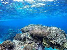 A #mermaid paradise. #ladyelliotisland #australia #australiagram #qld #greatbarrierreef #seeaustralia #thisisqueensland #wanttogoback #southerngreatbarrierreef #Snorkel #fish #coral #beach #simplyadventure #underwater #underwaterphotography #underthesea #