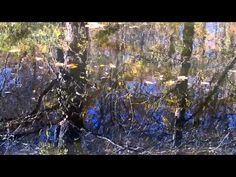 Native American Flute Music with Nature #1: Trickling Stream with Birds Sounds