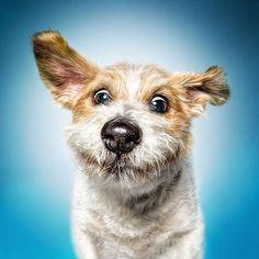 ❤ Eddie ❤  Der 12-jährige Eddie  schenkt euch heute ein Lächeln. Denn wusstet ihr, dass ein Lächeln eine Seelenumarmung ist ! #Dog #Funny #FunnyFaces #funnyface #animalprotection #soulmate #dogs #dogofinstagram #doglover #dogoftheday #doglove #dog_features #doglovers #excellent_dogs #instadog #bestwoof #buzzfeedanimals #dogphotography #photooftheday #canon #5dm3 #JackRussellMix #ParsonRussellMix #Terrier
