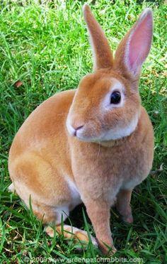 The Life of Animals: Rex Rabbit