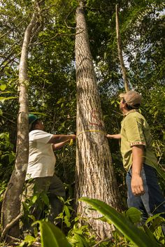 Forest communities are key to fighting climate change. Rainforest Alliance climate and forestry experts explain how. #earthtoparis