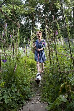 Alys Fowler and the Urban Pollinators Project - in pictures-A new science project discovers what flowers bees and butterflies love most. Alys shows how to help pollinators stay wel fed al summer. Lots of photos of her garden.
